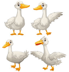 Duck in four different actions vector