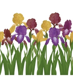 Flowers iris seamless vector image vector image