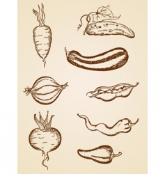 vintage vegetables set vector image
