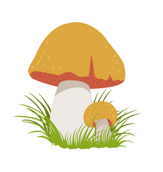 Boletus edulis edible forest mushrooms colorful vector