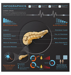 Pancreas anatomy system medical infographic vector