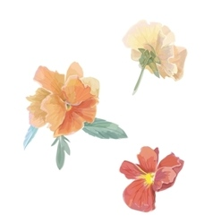 Set of flowers viola violet watercolor vector