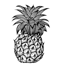 the pineapple sketch vector image vector image