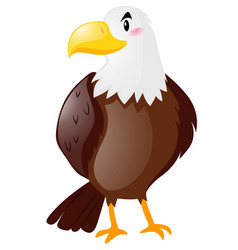 wild eagle on white background vector image vector image