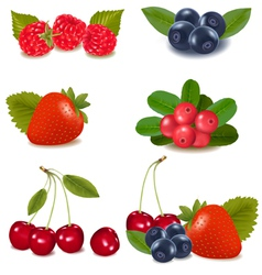 collection with berries and cherries vector image vector image