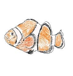 exotic sea fish vector image