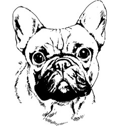 pedigree dog drawn in ink by hand vector image vector image