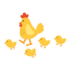 isolated chicken on white background vector image vector image