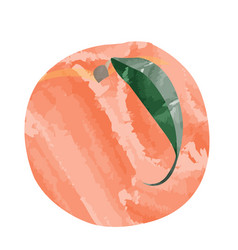 isolated colored peach vector image
