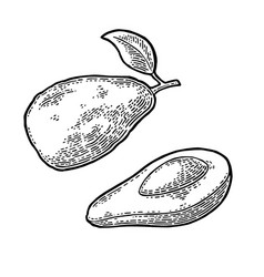 Half avocado with seed vintage engraving vector
