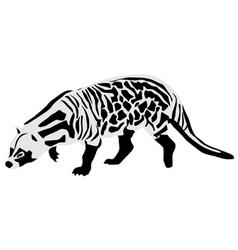 African civet vector image