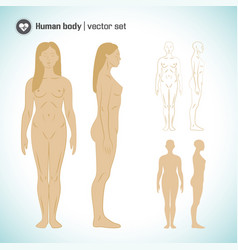 female body set vector image
