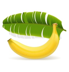 Ripe yellow banana with leaf vector image