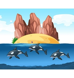Three dolphines swimming underwater vector