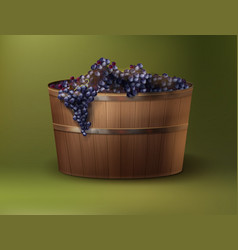 Vat of grapes vector