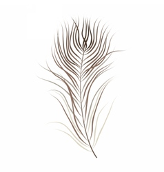 Isolated brown bird feather vector image vector image