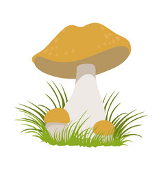 Lactarius quietus edible forest mushrooms vector