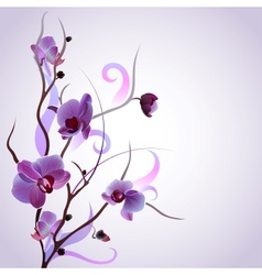 Card with orchid branch vector