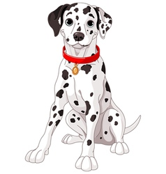 Cute dalmatian dog vector