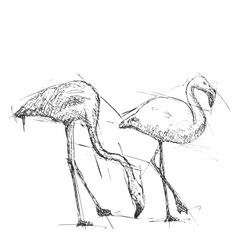 Sketch of flamingos vector