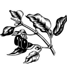 Cornus mas vector image vector image