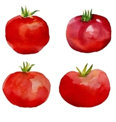 Watercolor set tomatoes vector