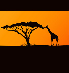 black silhouette of a giraffe and acacia vector image