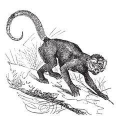 Cebus Capucinus vintage engraving vector image vector image