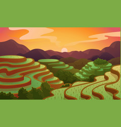 Landscape rice chinese field terrace vector