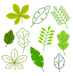 Set of stylized green leaves spring or summer vector