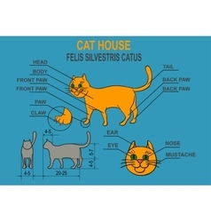Cat ordinary home infographics vector