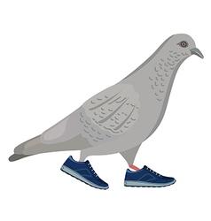 Going gray pigeon vector