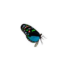 Realistic bluewing element of vector