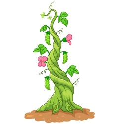 bean stalk vector image