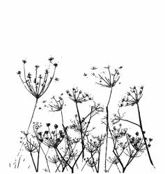 fennel flower vector image vector image