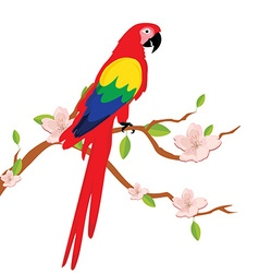 Macaw parrot on tree vector image vector image