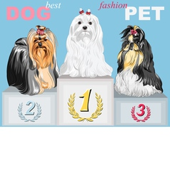 Fashion dog champion on the podium vector