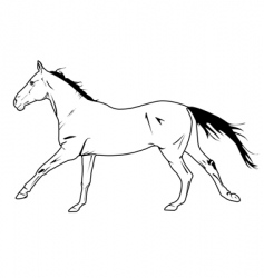Stallion galloping vector