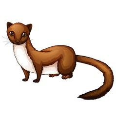 Weasel vector image