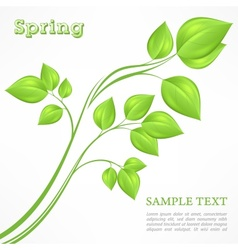 Spring branch with green vector