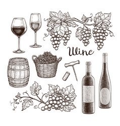 wine set isolated on white background vector image