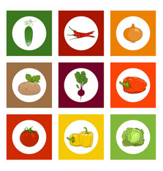 round icons vegetables on colorful background vector image