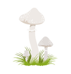 Amanita phalloides poisonous mushrooms colorful vector