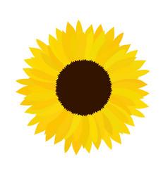 doodle sunflower vector image