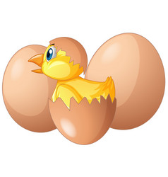 Little chick hatching out the egg vector