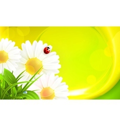 Daisy background vector image vector image