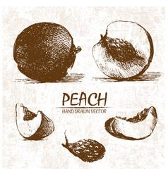 Digital detailed peach hand drawn vector