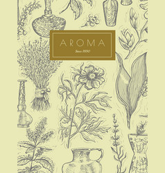 Vintage design with aromatic plants vector