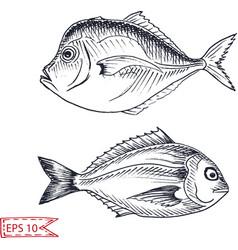 Sketch - fish hand drawn vector