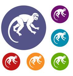 Capuchin monkey icons set vector